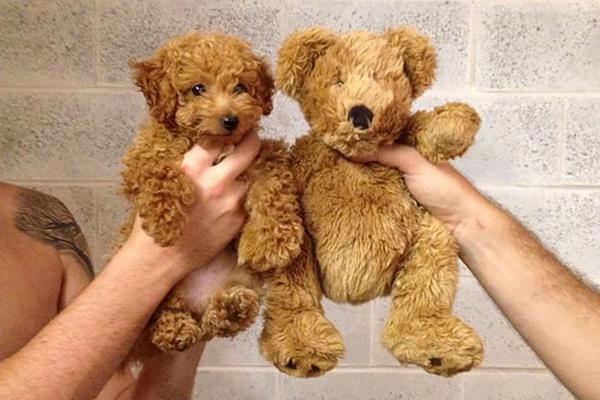 cuccioli-peluche